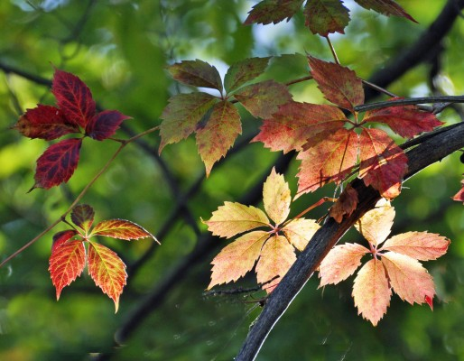 Autumn_Leaves